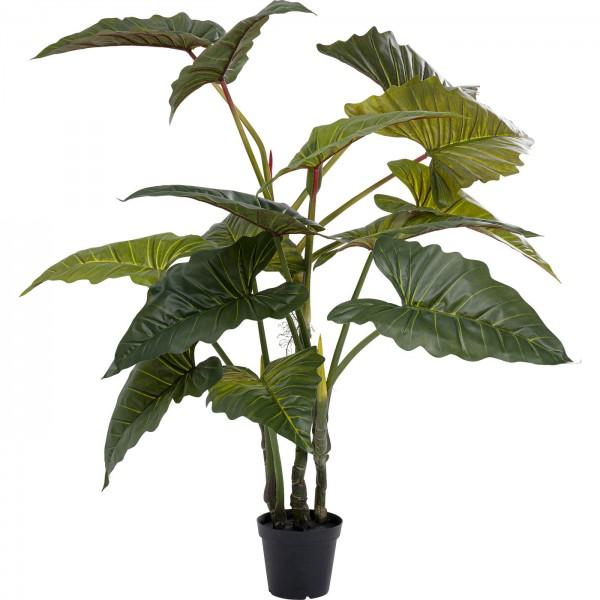 Plante de décoration Taro 180