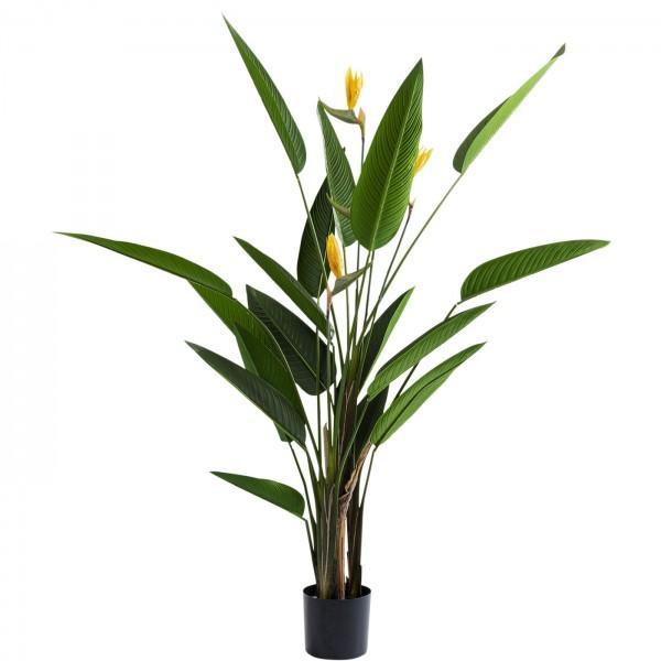 Décoration Plante Paradise Flowers 190