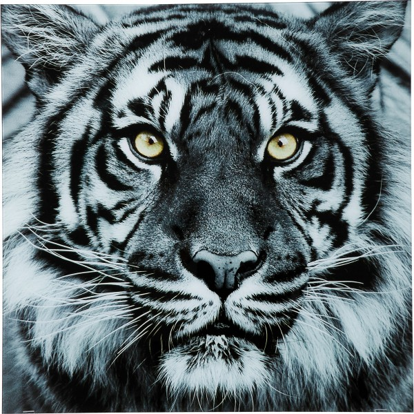 Picture Glass Face Tiger 80x80cm