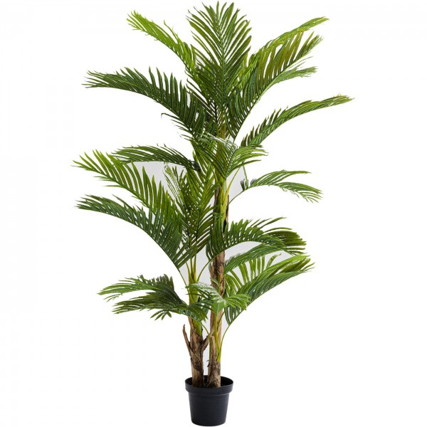 Decoration Plant Palm Tree 190